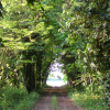 viale-alberato_ev
