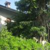 albero-pericolante-ev