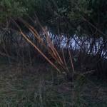 vegetazione-scortecciata-ev