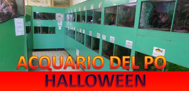 halloween-acquario_ev