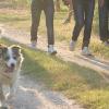 cane-passeggio-ev