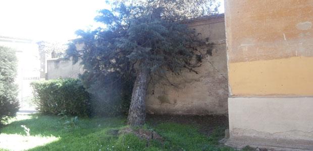 albero-sradicato_ev