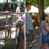 asini-festa-inizio-estate-gussola_ev