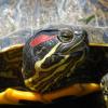 tartaruga-acqua_ev