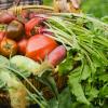 agricoltura-biologica_ev