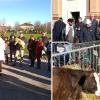 benedizione-animali-fontana-bozzolo_ev