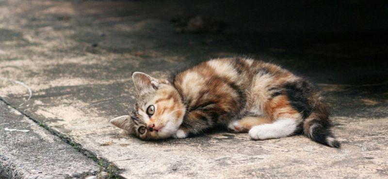 gatti_abbandonati