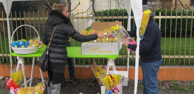 mimose_ev