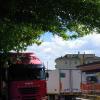 alberi3_ev