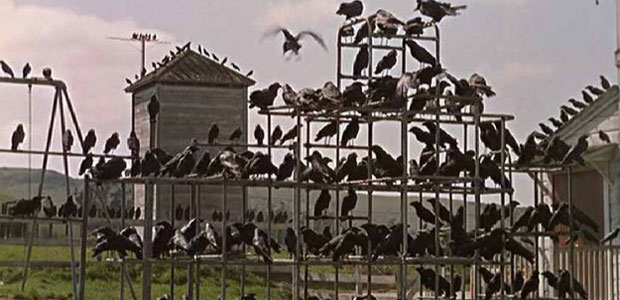 uccelli_ev