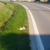 gatto-morto_ev