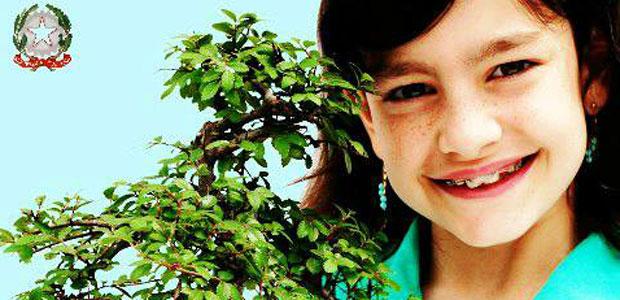 bonsai_ev