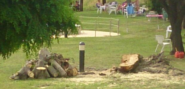 albero-abbattuto_ev