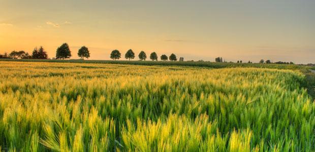 biologico-campi-agricoltura-ev