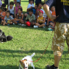 protezione-civile-cani_ev