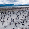 pinguini-patagonia_ev