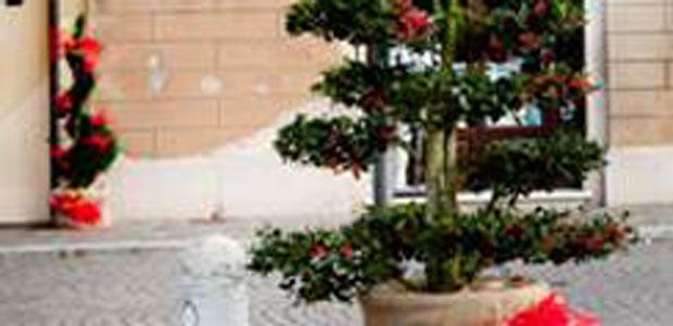 albero-natale-sabbioneta-ev