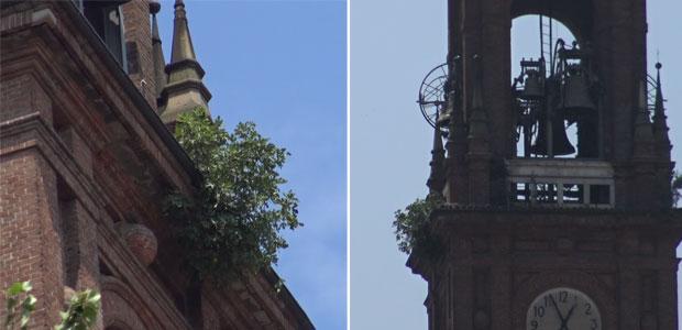 campanile-duomo-erbacce_ev