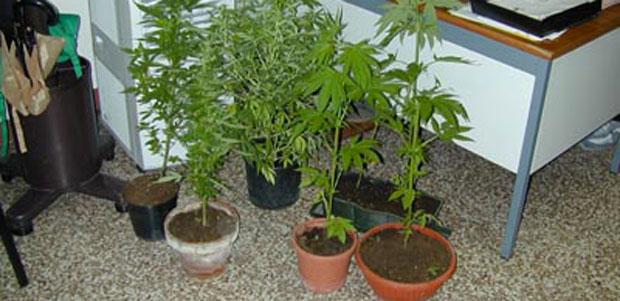 marijuana_ev