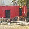animali-al-circo-ev