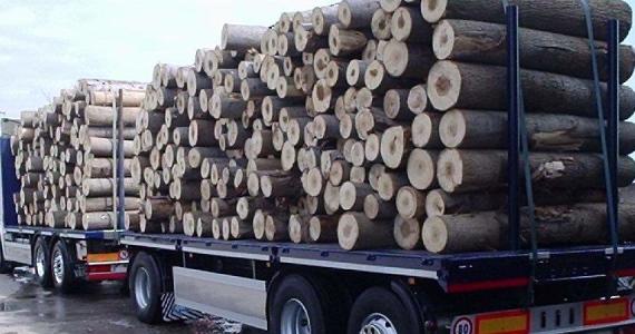 legno-ev