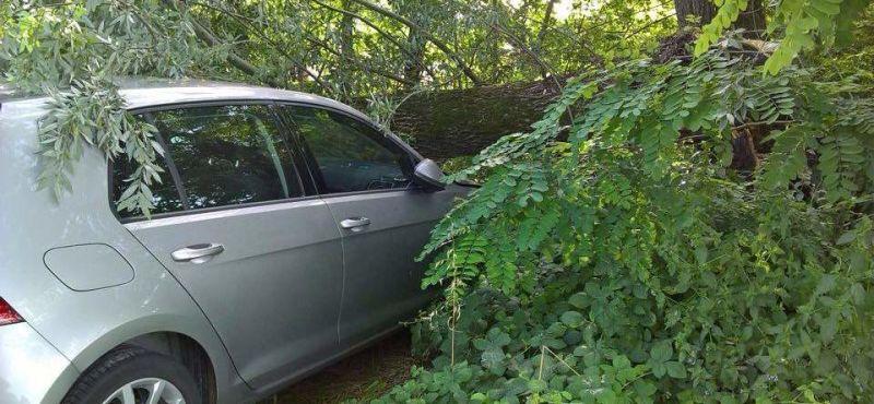 albero-cade-auto-ev
