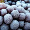 ice-wine_ev